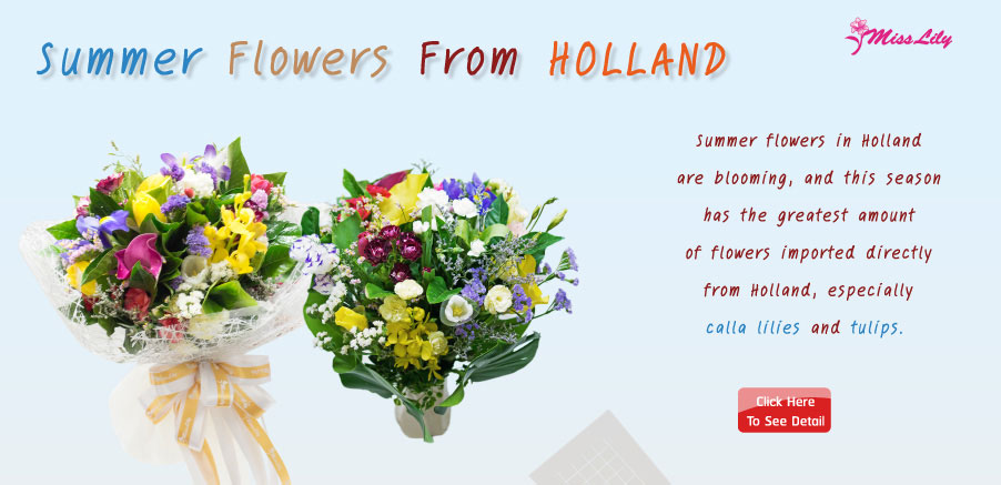 Holland Summer Flower